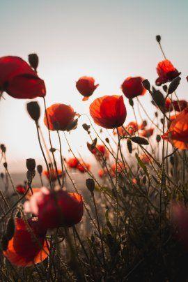 Las flores en la naturaleza